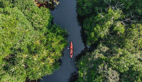 Restorasi Ekosistem Riau Terus Memperbaiki Hutan Rawa Gambut Utuh Terbesar di Sumatera