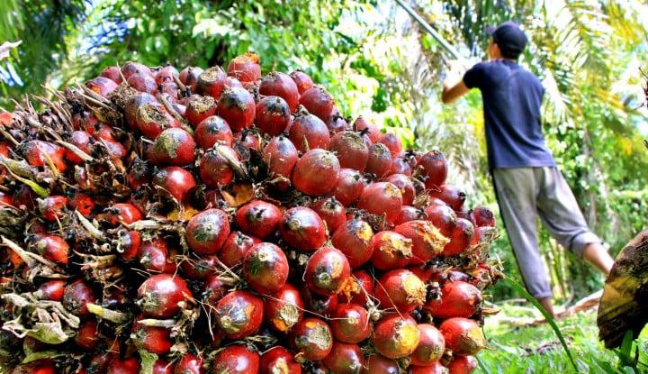 Bengkulu: Sawit, Andalan Pajak Tertinggi