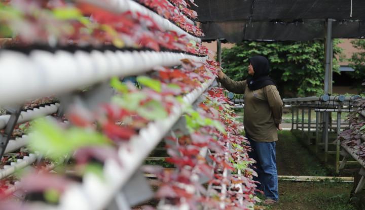 Percepat Masa Tanam Hidroponik, PLN Dukung Program Container Farming