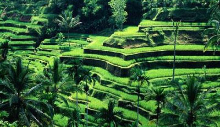 Wisata Bali Bangkit, Pulau Dewata Siap Terima Wisatawan Domestik