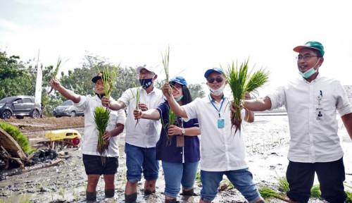 Klaster Pangan BUMN Sinergi Tingkatkan Produktivitas Pertanian