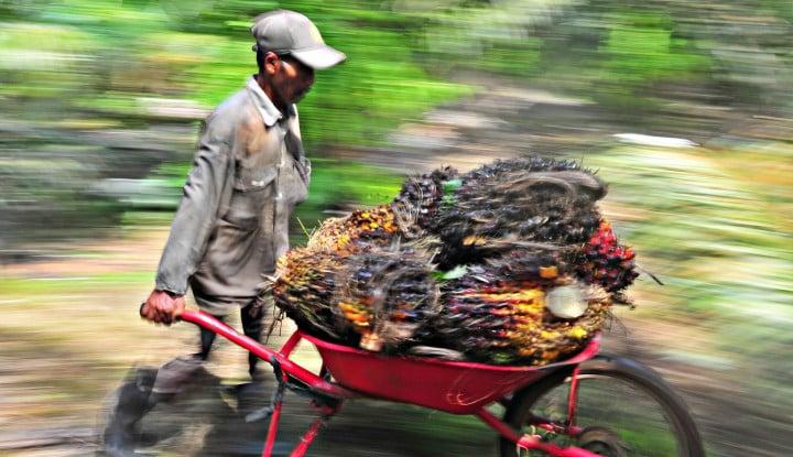 Ini Kontribusi Minyak Sawit Indonesia di Tengah Pandemi Covid-19