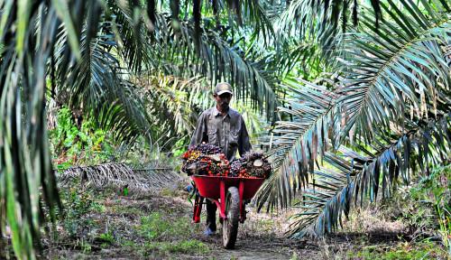 Kemendag Bentuk Tim Kampanye Positif Sawit Indonesia