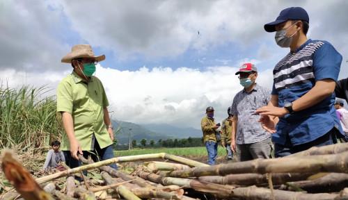 PTPN XI Siap Maniskan Gula Nusantara. Ini Strateginya...