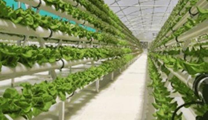 Perkuat Potensi Sumbar, Pasangan Mahyeldi-Audy Garap Program Pertanian Milenial
