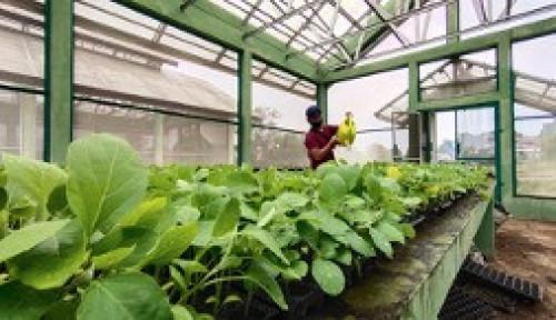 Kementan: Wirausaha Muda Pertanian Jadi Solusi Ketahanan Pangan