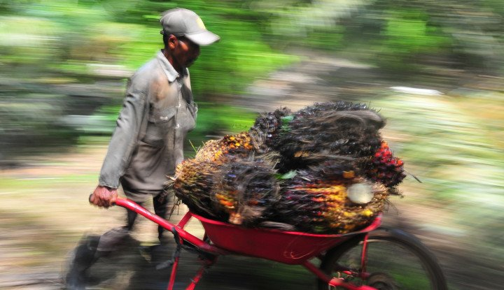 Minyak Sawit: Uji Coba Produksi Bensin Superbiohydrocarbon