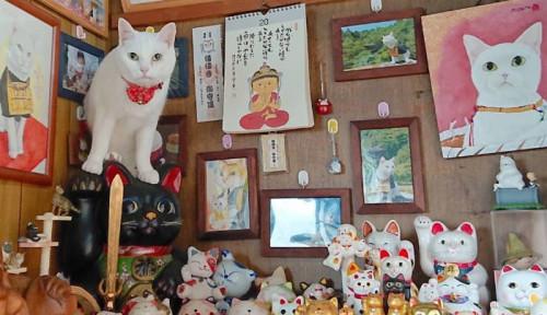 Gemas! Ini Dia Kuil dengan Semua Biksunya Adalah Kucing