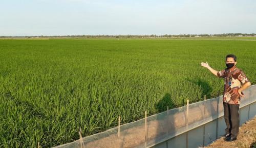 BUMN Klaster Pangan Garap Food Estate Sukamandi 1.000 Ha