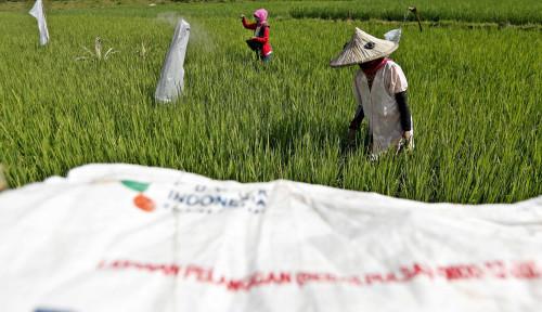 Muantap! Program Agro Solution Pupuk Indonesia Jadi The Best Innovation in Social Business Model