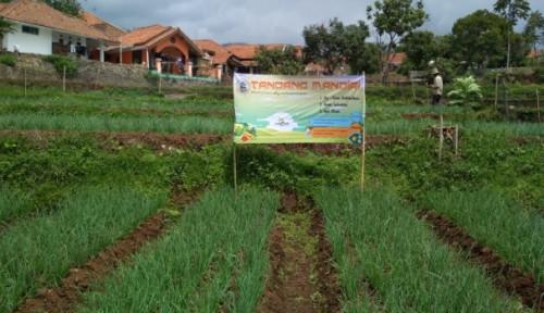 Kolaborasi Kostratani-PWMP-YESS Hasilkan Tandang Mandiri Farm