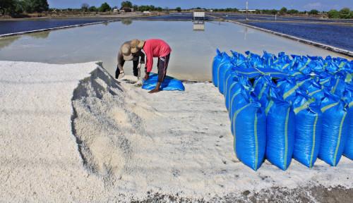 Luar Biasa! Efek Bantuan Washing Plant KKP, Garam Rakyat Terjual 200 Ton dalam Sebulan