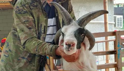 Berkat PWMP, Petani Milenial Raih Omzet Rp3 Miliar dari Penggemukan Domba