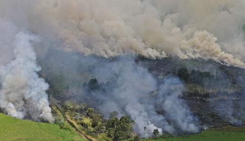Catatan 2020: Kebakaran Hutan Terburuk Sepanjang 18 Tahun