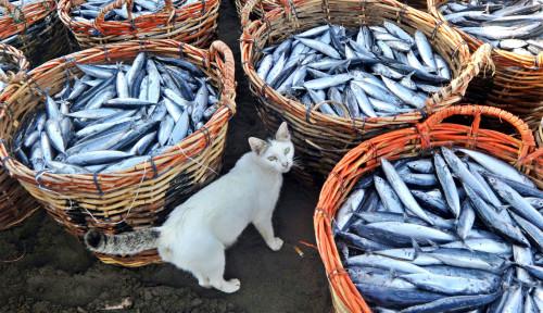 Ngaco, Mantan Menteri Sri Lanka Malah Lahap Kunyah Ikan Mentah di Tengah Acara Penting