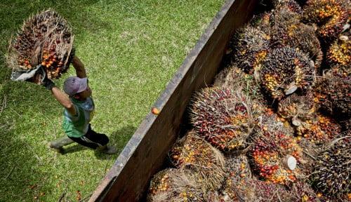 Sinergi Indonesia-Jepang Penuhi Kebutuhan EBT Melalui Minyak Sawit