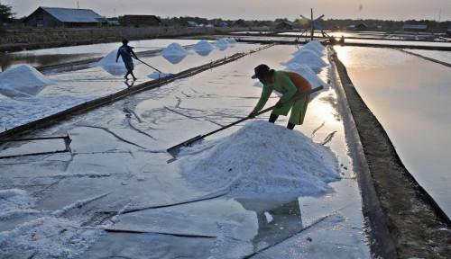 Ini Alasan Pemerintah Lakukan Impor Garam