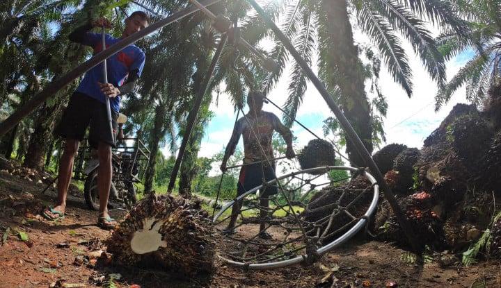Realisasi PSR PTPN V Diklaim Terluas yang Dilakukan Holding Nusantara