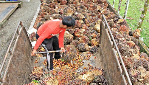 Kabar Baik! Sawit Indonesia Akan Melenggang di Pasar Eropa