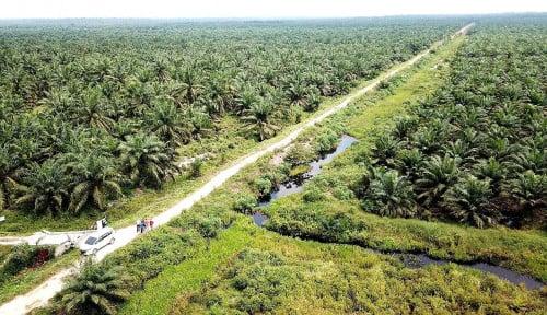 Bukan Sawit, Ini Top-5 Komoditas Driver Deforestasi Dunia