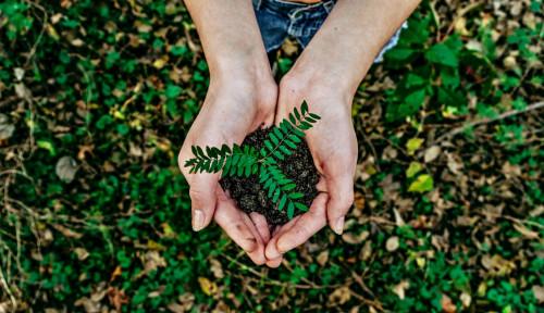 Program Gerakan Menabung Pohon Berlabuh ke Meja Hijau