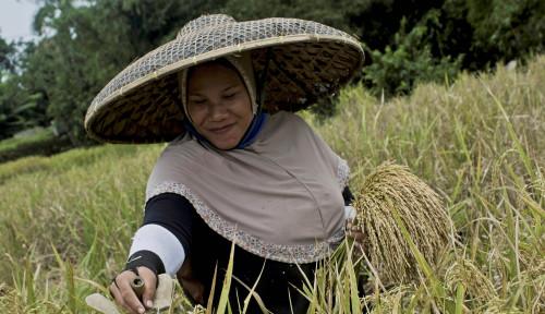 Selama 2020, Keuntungan Petani Naik 2,25%