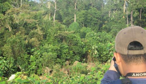 Kemen-LHK Perluas Moratorium Hutan Primer Jadi 66,18 Juta Ha