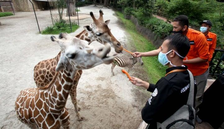 Rumah Zakat Salurkan Pakan Satwa ke 13 Kebun Binatang di 9 Provinsi