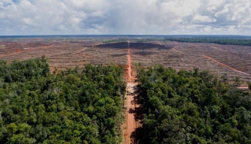 Hutan Tropis Rusak, WWF Tunjuk-tunjuk Hidung Uni Eropa: Ini Lingkaran Setan...
