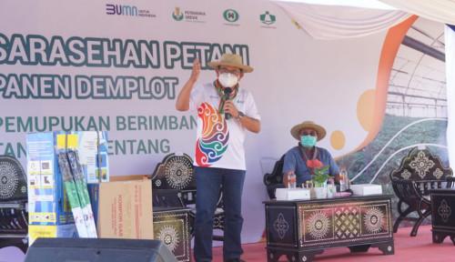 Alhamdulillah, Produktivitas Kentang di Sembalun Naik Dua Kali Lipat