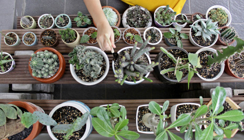 Foto Bukan Lagi Janda Bolong, Ini Prediksi 4 Tanaman Hias Laris pada 2021!