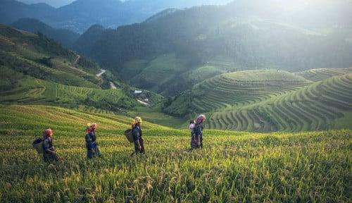BPS: Pertanian Sektor Andalan  di Triwulan I 2021