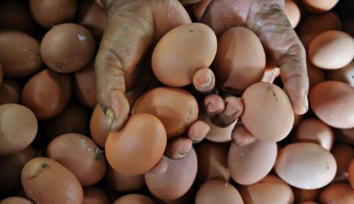 Harga Telur Jatuh Terus, BI Proyeksi Pekan Pertama Februari Deflasi  0,01%