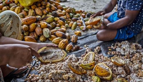 April 2021: Harga Referensi CPO dan Biji Kakao Naik