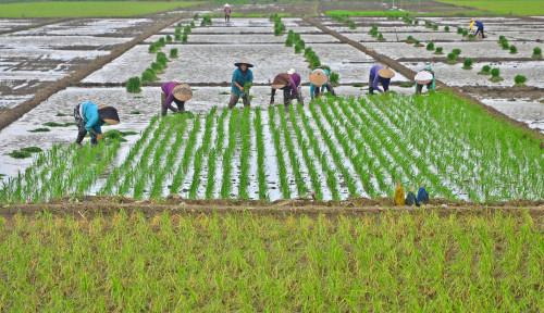 Genjot Produksi Pertanian, BPPSDMP Tingkatkan Pemantauan Lapangan dengan Kostratani