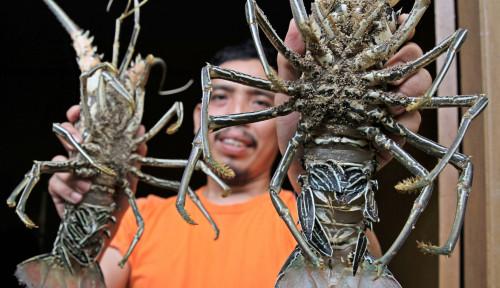 Untuk Urusan Lobster, Menteri Sakti Ngaku Ingin Belajar dari Vietnam