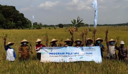 Panen Raya Demo Farm PT PII Dukung Ketahanan Pangan Nasional