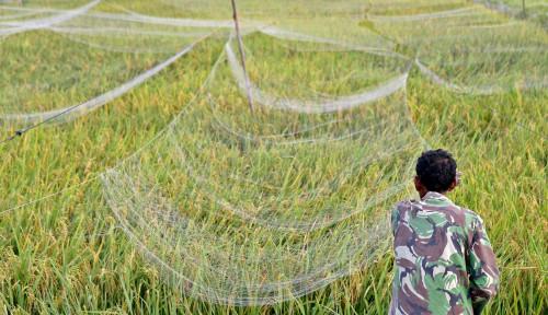 Awal Tahun Daya Beli Petani Menguat Tipis 0,01%, BPS: Flat...