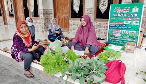 Kamilah Hidroponik, Bukti Eksistensi Sektor Pertanian di Masa Pandemi Covid-19
