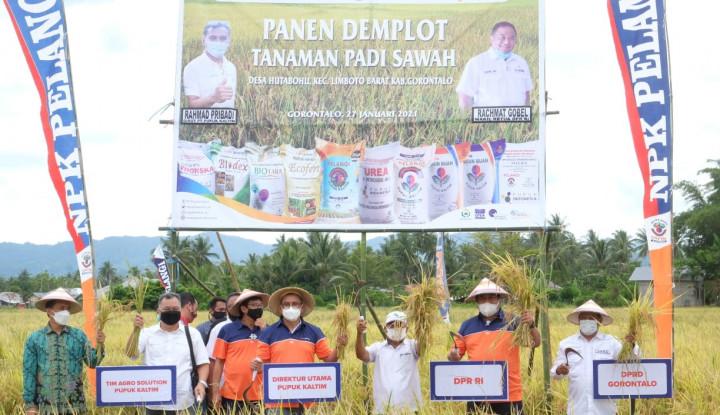 Muantap Pol! Agro Solution Pupuk Kaltim Tingkatkan Produktivitas Padi Gorontalo Hingga 80%