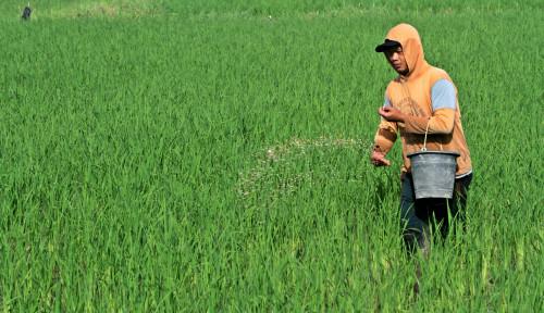NTP dan NTUP Naik, Untirta: Kesejahteraan Petani Membaik