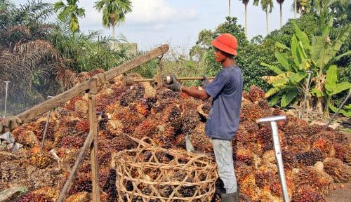 Komitmen Indonesia Hempas Kampanye Negatif Sawit