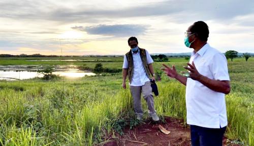 Gerakkan Roda Ekonomi Petani, Bupati Paulus Limu Bangga Food Estate Sumba Tengah