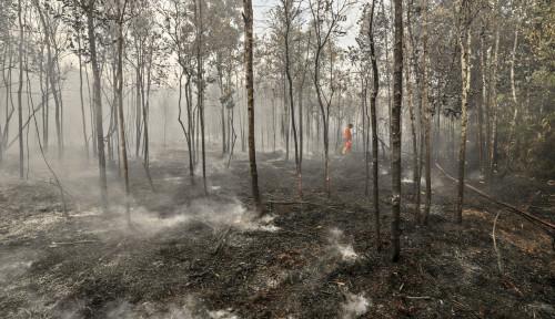 Pemerintah Klaim Tingkat Kerusakan Hutan Turun 75%