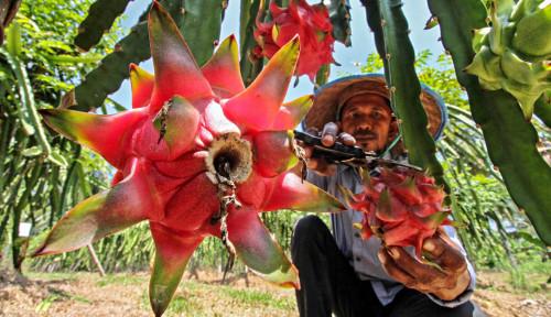 Perluasan Akses Pasar Hasil Pertanian Tingkatkan Kesejahteraan Petani