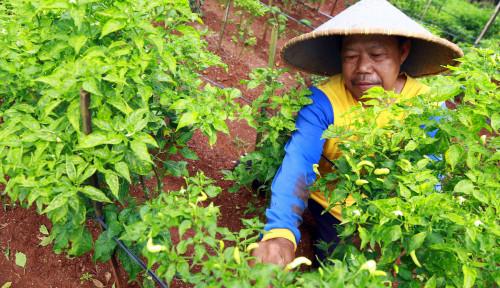 Petani di Sumatera Utara Dapat Rasakan Manfaat KUR Sektor Pertanian