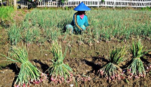 Pengamat Apresiasi Bantuan Kementan untuk Food Estate di Sumut