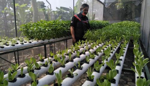 Panen Untung Lewat Urban Farming Ala Warga Bandung, Guys, Mau Coba?