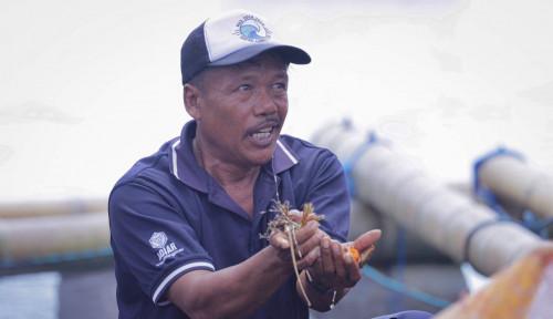 Jadikan Lombok Pusat Budi Daya Lobster, Menteri Trenggono: Saya Dukung Sampai Mati!