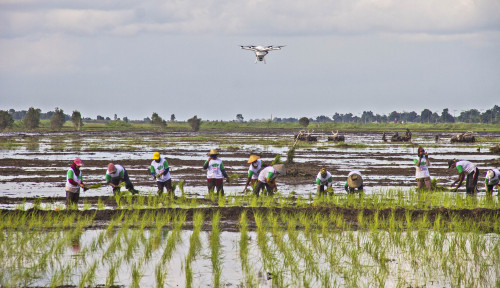 Agro Solution Tingkatkan Keuntungan Petani Hingga 91 Persen